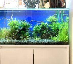 90cm淡水魚水槽 グリーンズクリニック様 待合室サムネイル画像