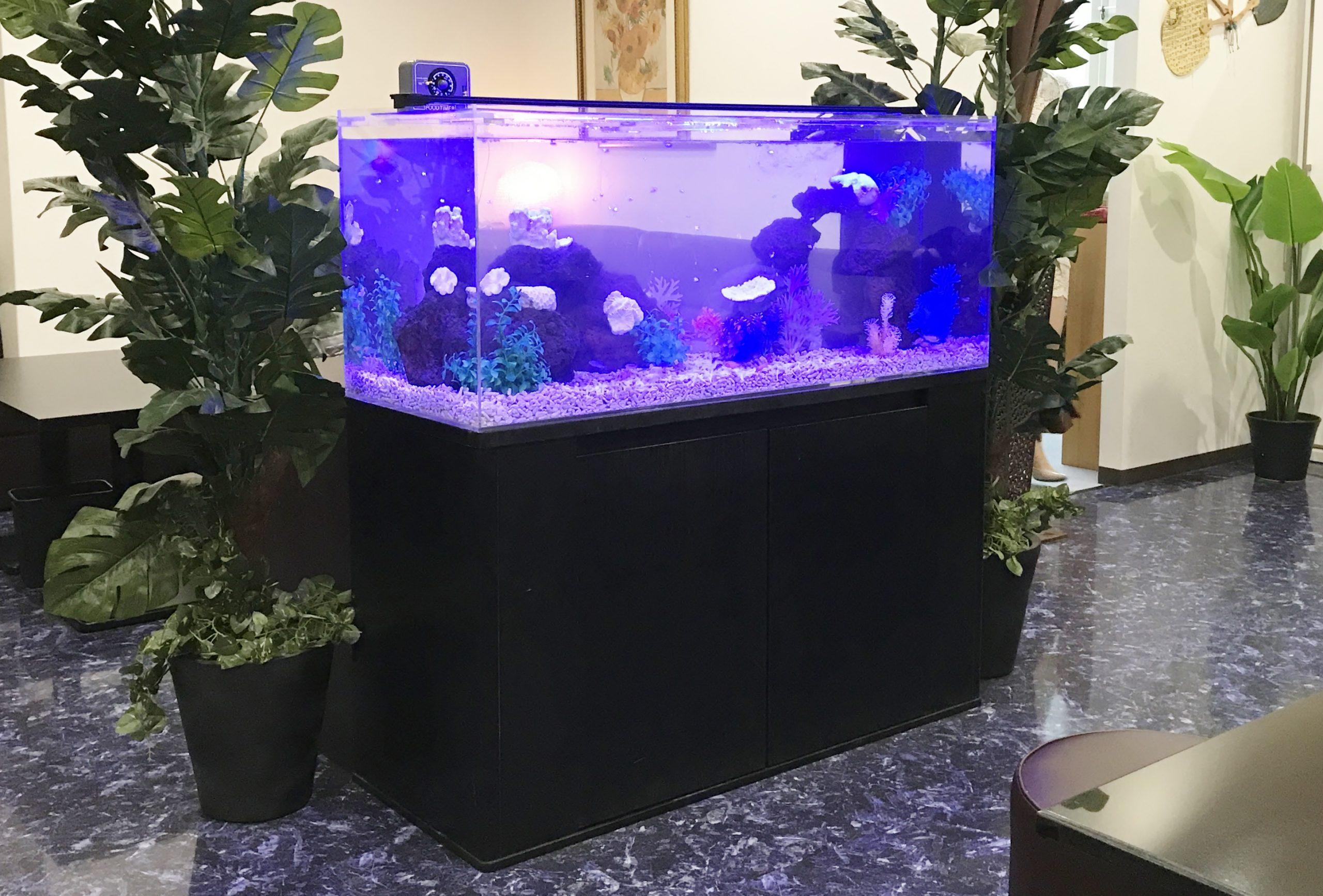 クラブ 120cm淡水魚水槽 斜め全体画像