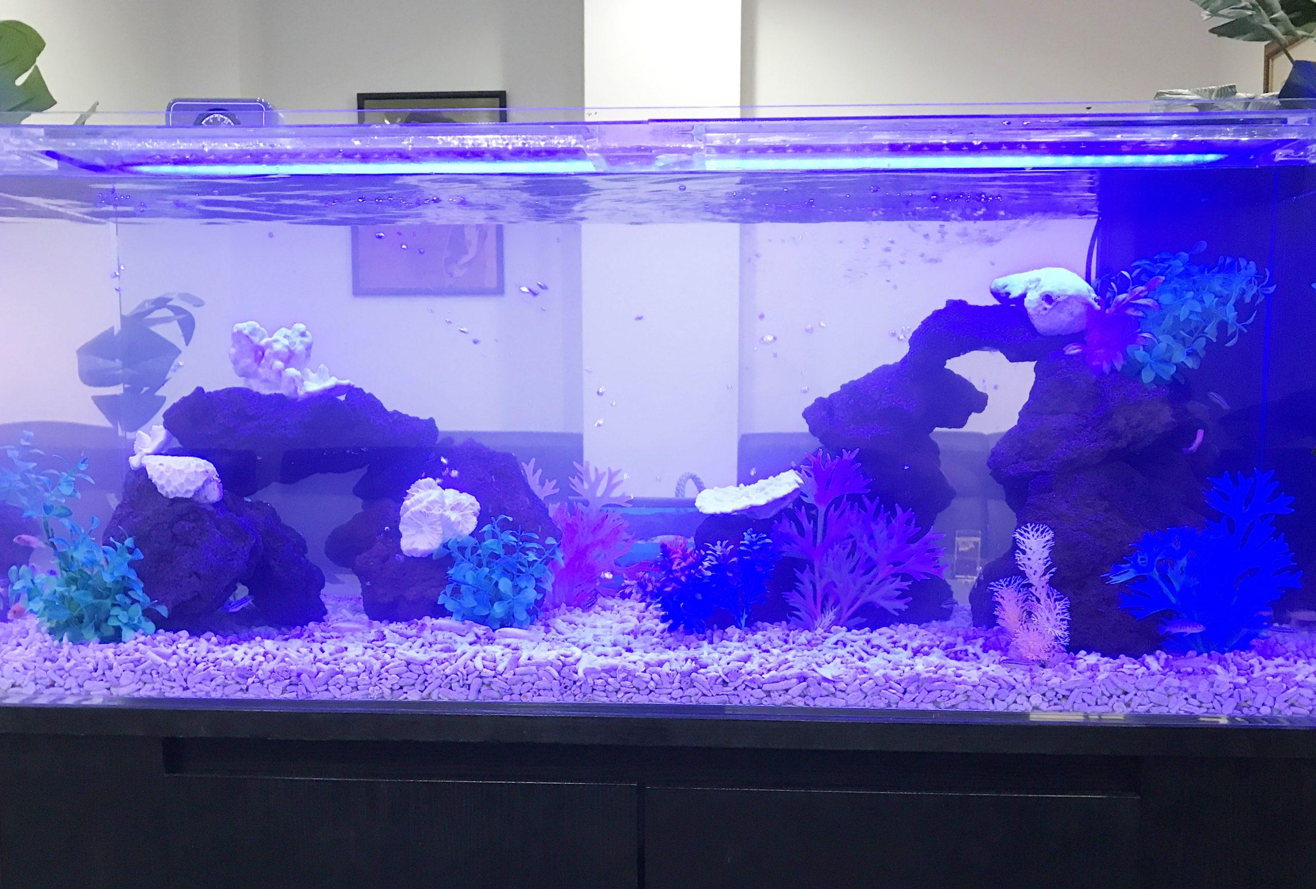 クラブ 120cm淡水魚水槽 アップ画像