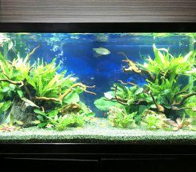 淡水魚水槽リニューアル 大阪市 オフィスサムネイル画像