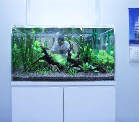 90cm淡水魚水槽 オフィス エントランスサムネイル画像