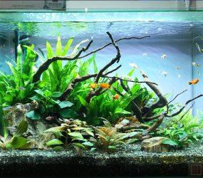 60cm淡水魚水槽 大阪市 飲食店(バー)サムネイル画像