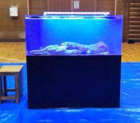 120cm海水魚水槽 和歌山県伊都郡 撮影レンタルサムネイル画像