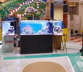 120cm海水魚水槽など複数台レンタル 科学館イベントサムネイル画像